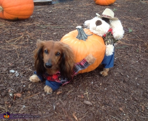 This is Larry doing his bow. Ta Da!, The Great Pumpkin Harvest Costume