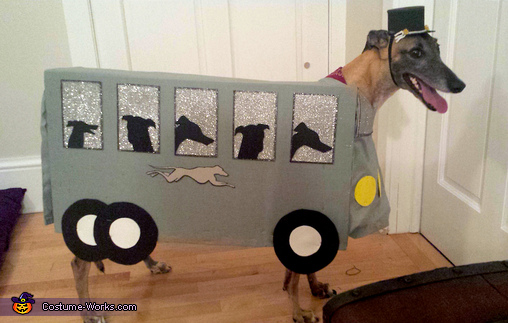 Greyhound Bus Dog Costume