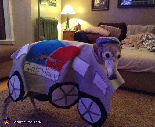 Greyhound Bus Dog Costume