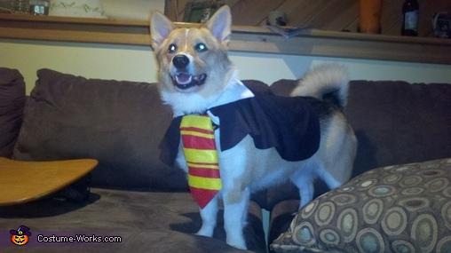 Jayden - Gryffincorg!, Gryffincorg! Costume