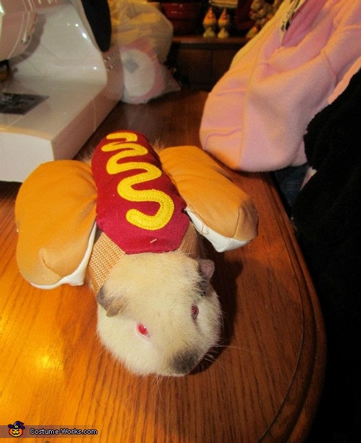 Guinea Pig Hot Dog Costume & Guinea Pig Hot Dog - Halloween Costumes for Pets