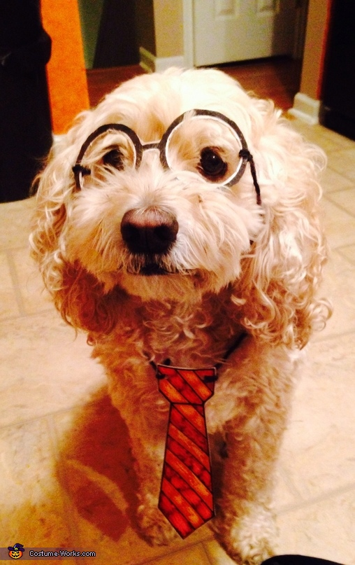 Hairy Harry Potter Dog Costume