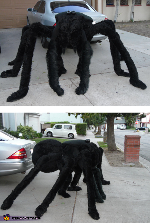 Yes, I am inside there., Hairy Spider Costume