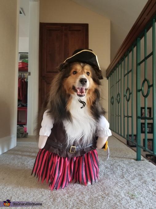 Happy Sheltie Pirate Costume