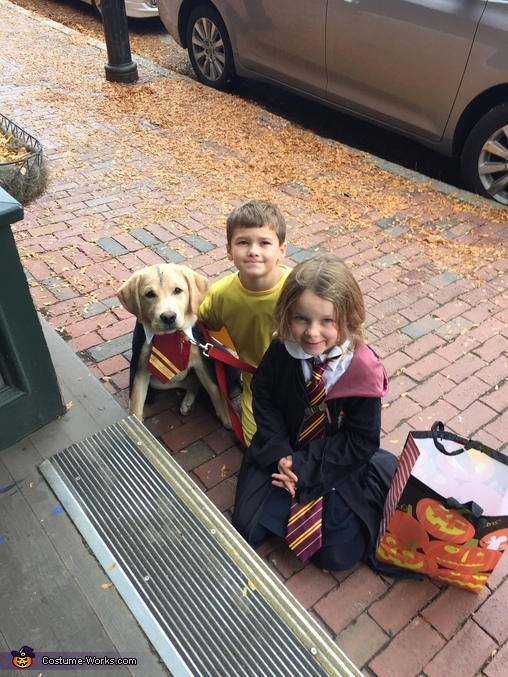 Harry Potter is so obedient!, Harry Potter and Friends Costume