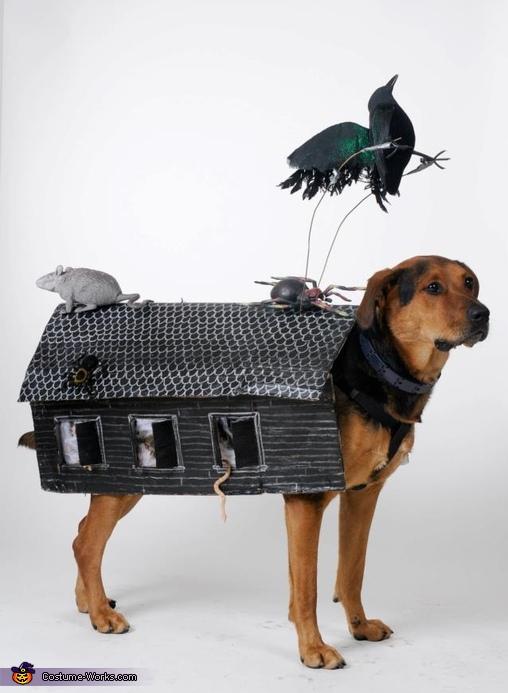 Haunted House Dog Costume