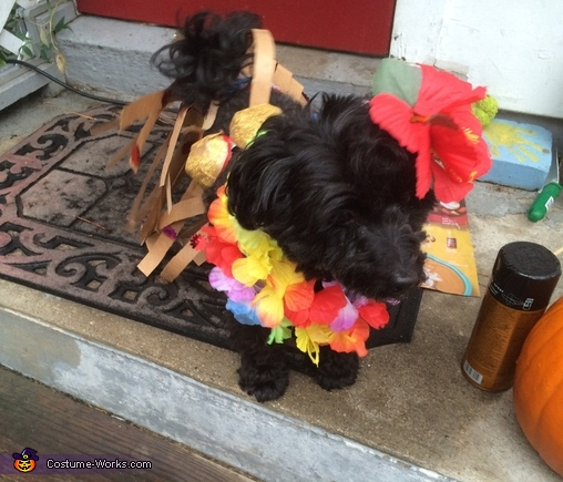 Hawaiian Dog Homemade Costume