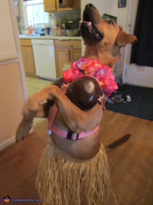 Hawaiian Hula Dancer Dog Costume