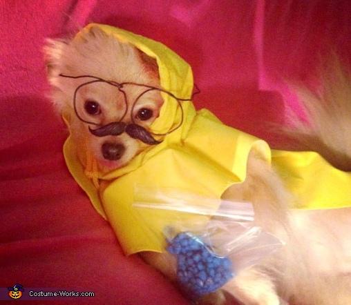 Heisendog Costume