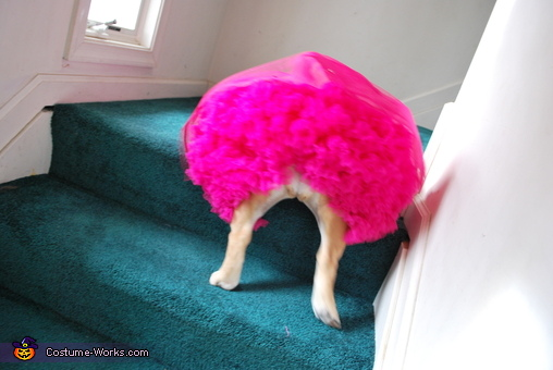How's my tutu?, Honey Boo Boo Costume