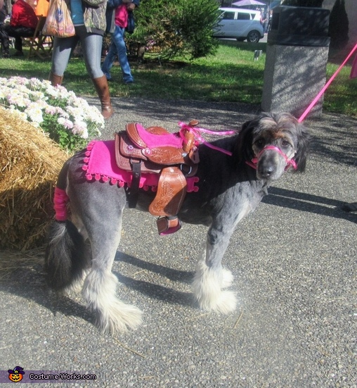 Horse Pony Dog Costume