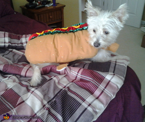hot dog, Whoopie Cushion Costume