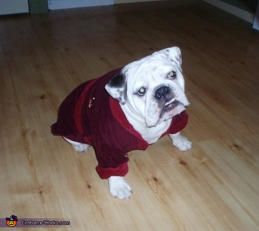 Hugh Hefner Dog Costume