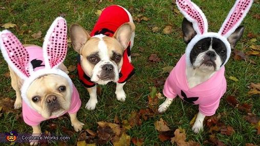 Hugh & the Playboy Bunnies Costume