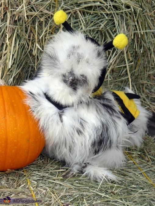 Jellybean the Hunnybee Costume
