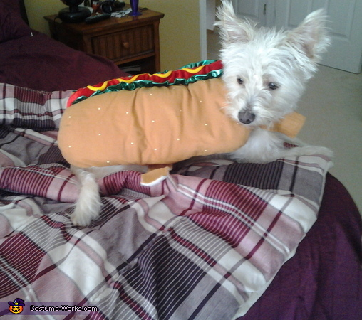 hotdog, Ice Cream and Hot Dog Costumes