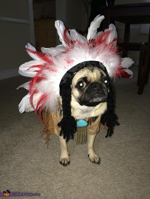 Indian Pug Homemade Costume