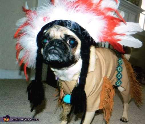 Indian Pug Homemade Costume