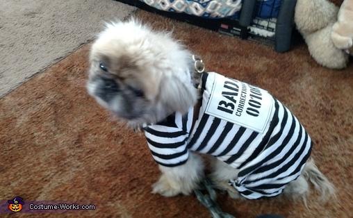 Inmate Prisoner Dog Costume