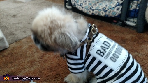 Inmate Prisoner Dog Costume