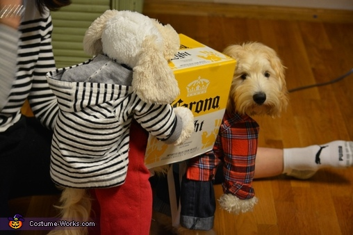 dogs carrying a box of corona beer costume photo 6 6. Black Bedroom Furniture Sets. Home Design Ideas