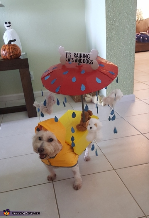 It S Raining Cats And Dogs Halloween Costume