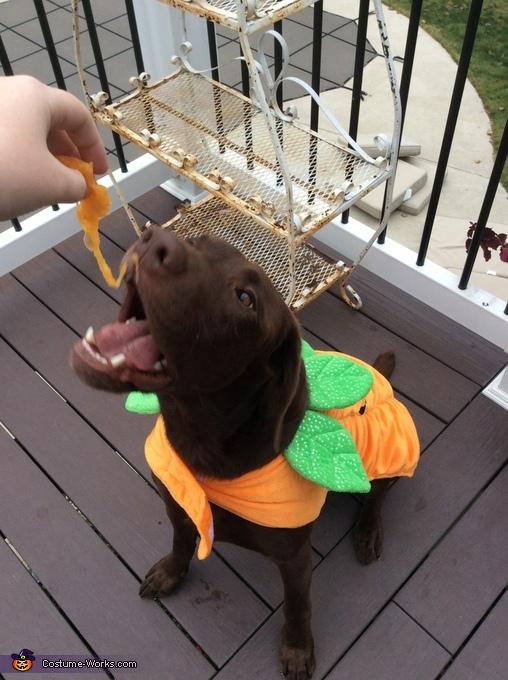 Favorite snack, Jack O Lantern Costume