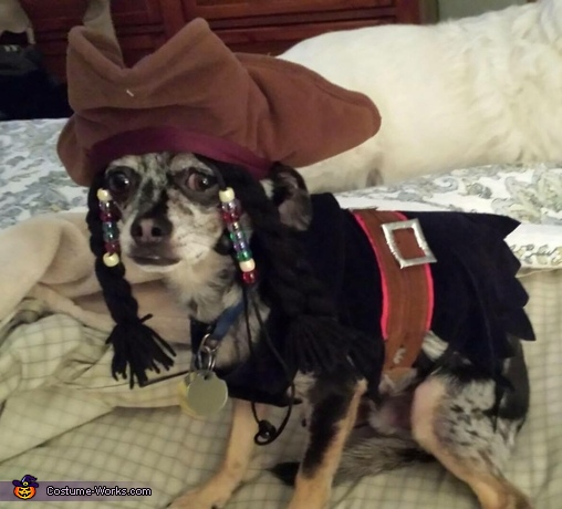 Jack Sparrow Dog Costume