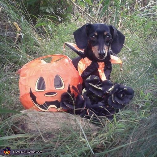 Jackal Dog Costume
