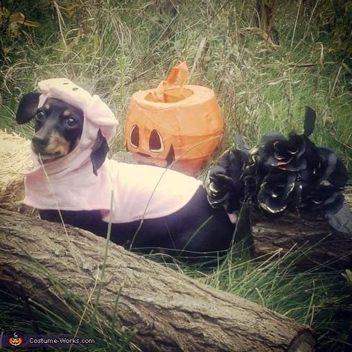 Takoda the Piggy, Jackal Dog Costume