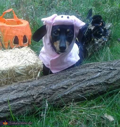 Pig weenie, Jackalweenie Costume