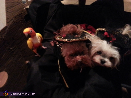 Pirate Pet Rescue Homemade Costume