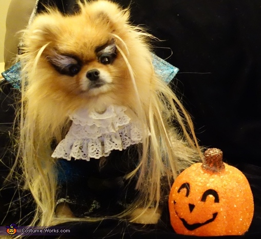 Jareth from Labyrinth Dog's Costume