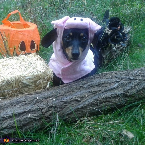 Piglet wants a pumpkin, Jester Costume