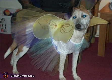Halloween Fairy - Homemade costumes for pets