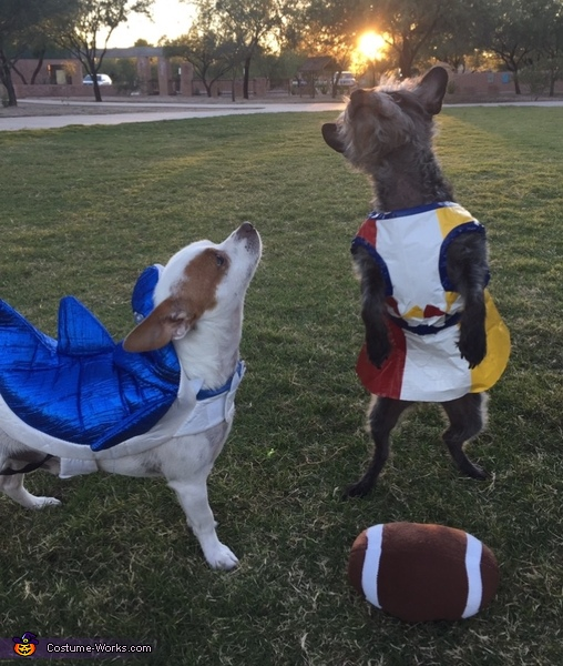 Katy Perry and Left Shark Costume