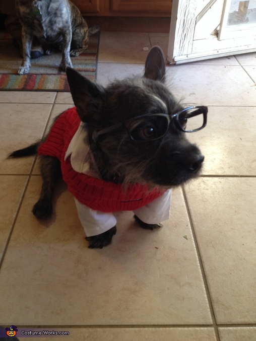 Ken Bone Dog Homemade Costume