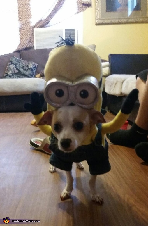 Kevin Minion Costume