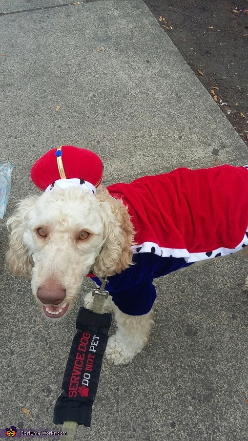 King Arthur Dog Costume