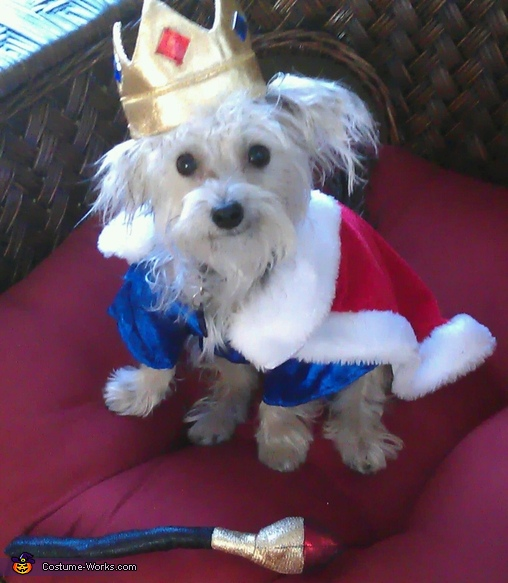 King of the Dogs Costume