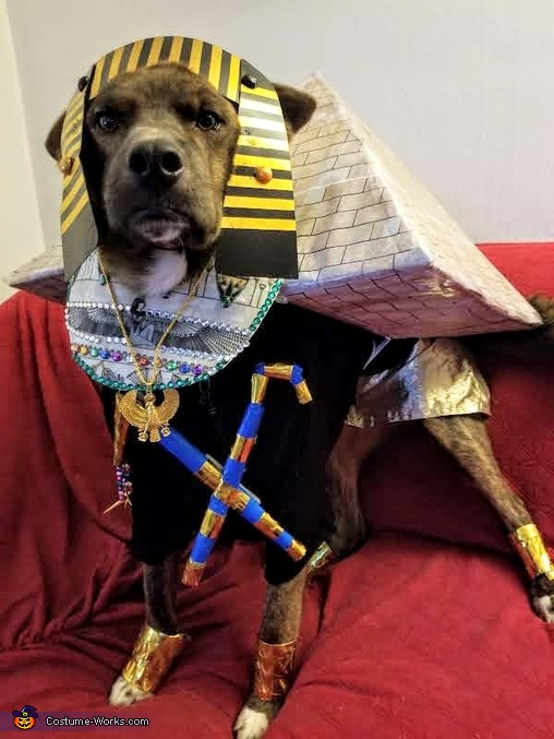 King Pup Regal look, KIng Pup Costume