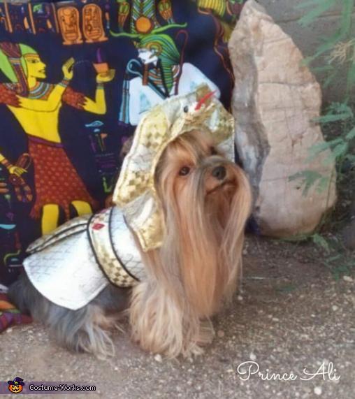 King Tut Costume