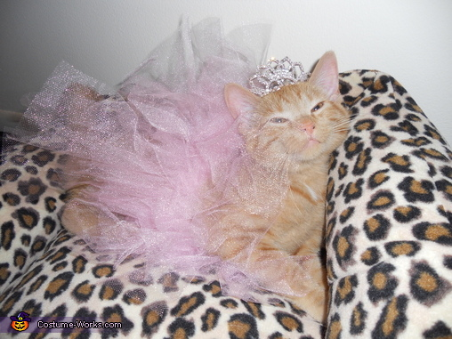 Kitten Princess Costume