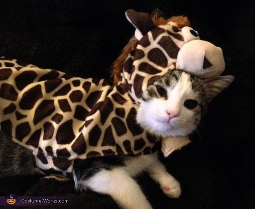 Kitten Safari Costume