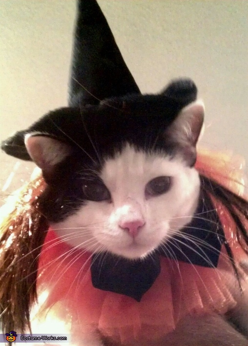 Baxter Boo, Kitty Witch Costume