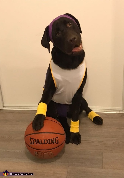 LA Lakers Basketball Player Dog's Costume