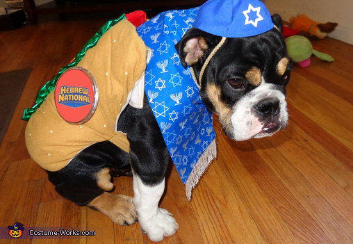 Cutest Kosher Dog Ever!!!, Kosher Dog Costume