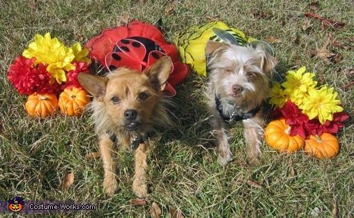 Ladybug and Bumblebee Dogs Costumes