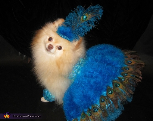 Las Vegas Showdog Costume