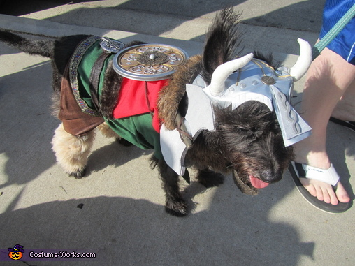 Murdock as Leif Erikkson the viking and walking in a Halloween pet parade in Long Beach, CA, Leif Eriksson the Viking Costume